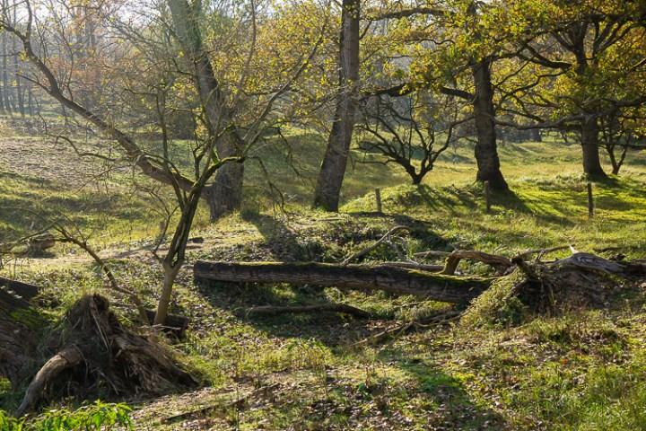 Bos in de Amsterdamse Waterleidingduinen