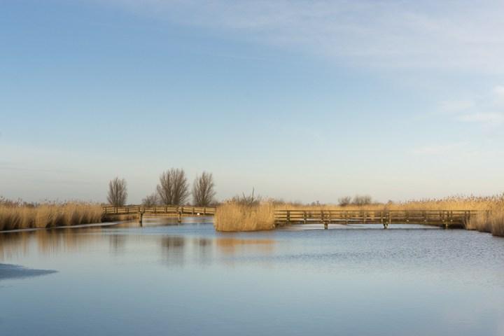 Natuur bij Oostvaardersplassen in Nationaal Park Nieuw Land, Flevoland.