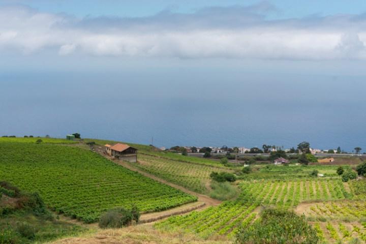 Wijnproeverij op Tenerife