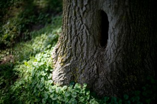 There were a couple trees with these little animal abodes in them. What could be more curiosity-triggering to a three-year-old than that?