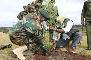 Kenyans urged to plant more trees by KFS to mitigate the effects of climate change