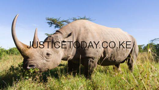 Sh 140M raised in Sabor Rhino Charge for Forest and Wildlife conservation