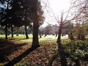 graveyard-tree