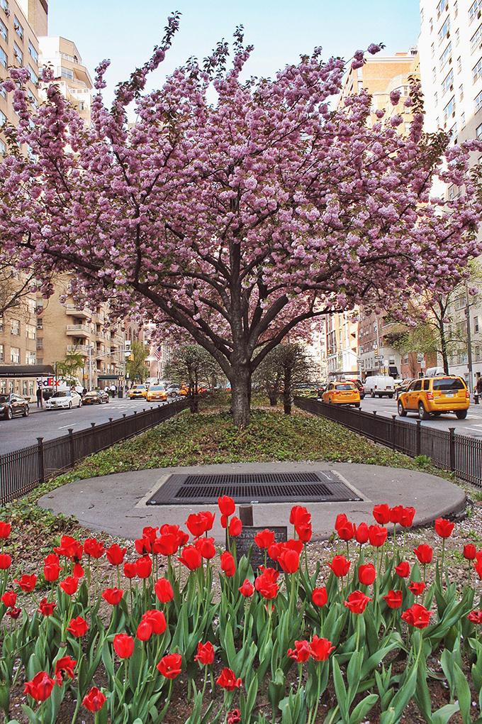 Snapshot   New York City   Park Avenue in Bloom // JustineCelina.com