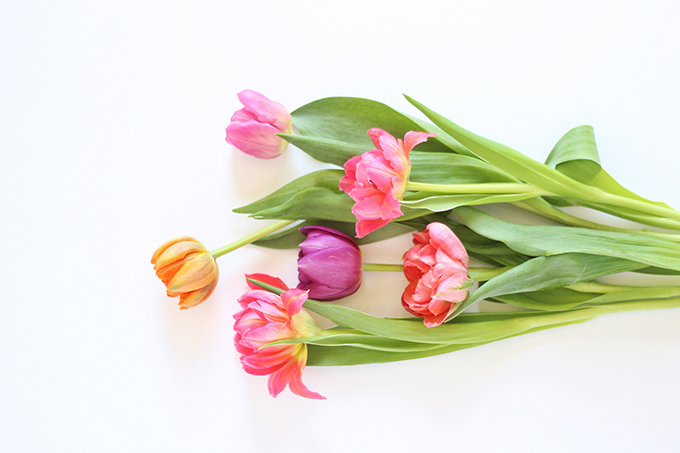 All About Tulips | Double Tulips // JustineCelina.com