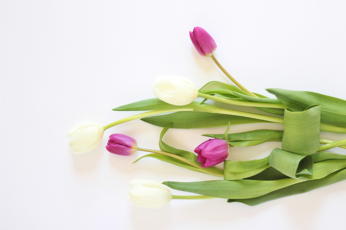 All About Tulips | Standard Tulips // JustineCelina.com