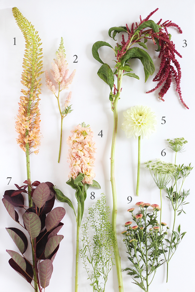 An Introduction to Autumn Flowers | How to Identify Flowers // JustineCelina.com