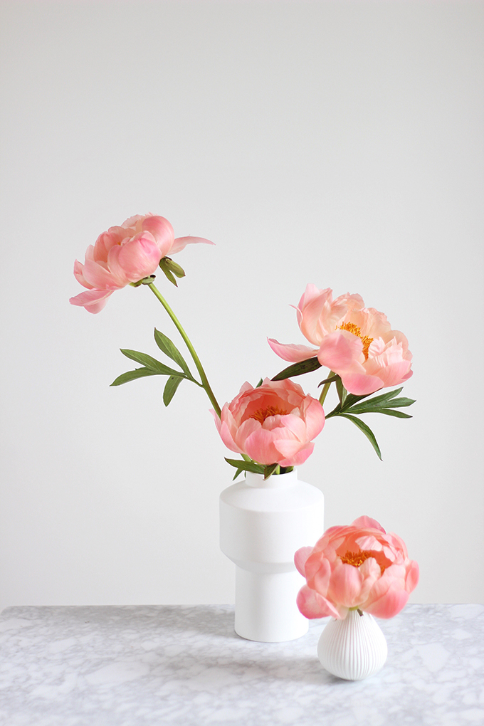 All About Peonies | Purchasing and care tips | Coral Sunset Peonies // JustineCelina.com x Rebecca Dawn Design