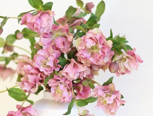 DIY   Homemade Flower Food // JustineCelina.com
