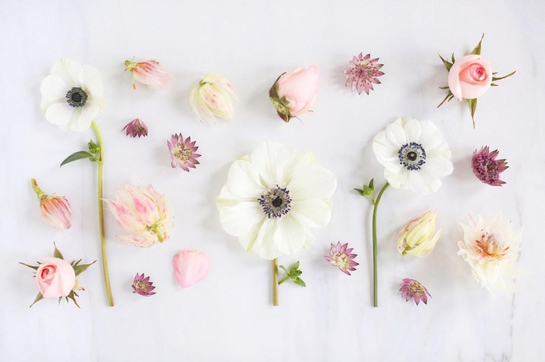 DIGITAL BLOOMS FEBRUARY 2018   Free Blush Floral Desktop Wallpapers for Valentine's Day   Design 3 // JustineCelina.com x Rebecca Dawn Design