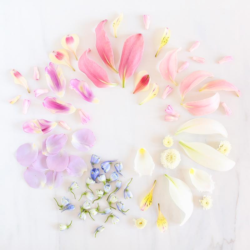 Digital Blooms June 2018 | Free Pantone Inspired Desktop Wallpapers for Spring and Summer | Free Pastel Tech Wallpapers // JustineCelina.com x Rebecca Dawn Design