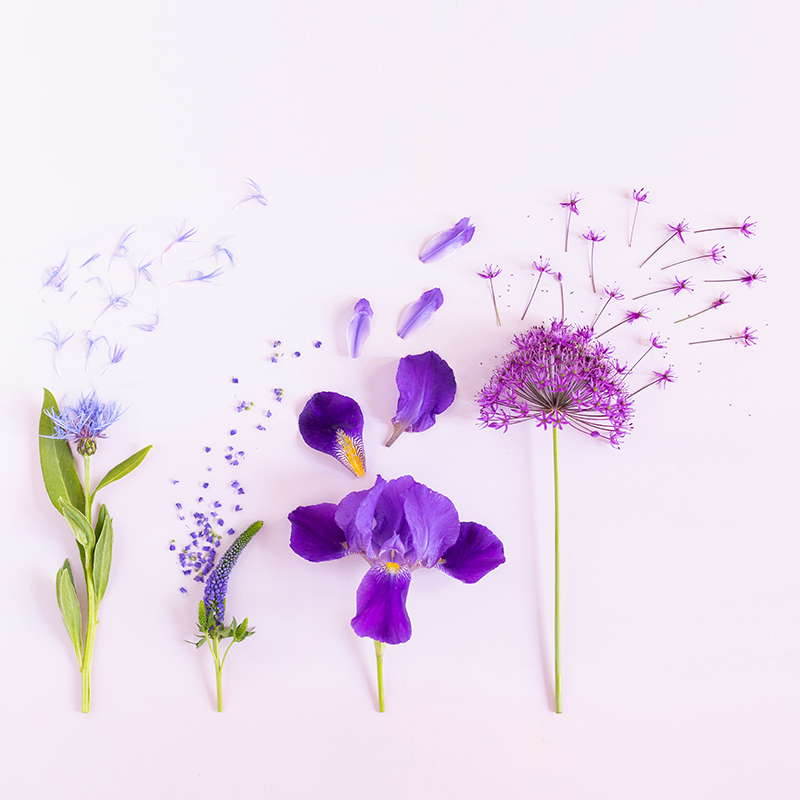 Digital Blooms July 2018 | Free Pantone 2018 Colour of the Year Inspired Desktop Wallpapers for Spring and Summer | Free Bright Summer Floral Wallpapers | Design 2 // JustineCelina.com x Rebecca Dawn Design