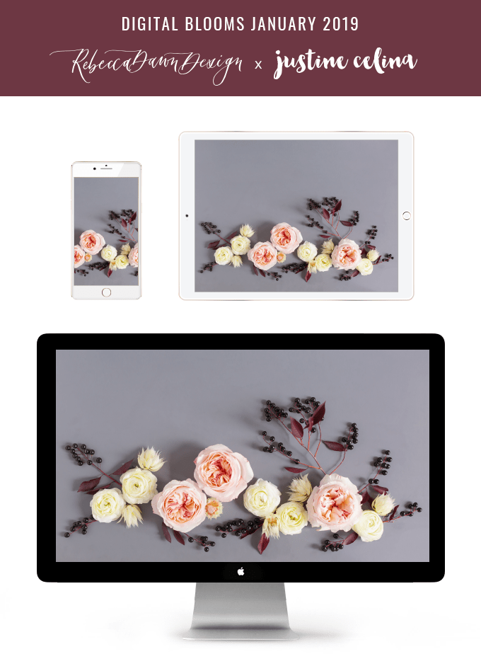 DIGITAL BLOOMS JANUARY 2019 | FREE DESKTOP WALLPAPER | Free Winter 2019 Floral Desktop Wallpapers featuring Blush Garden Roses, White Ranunculus, Blushing Bride Proteas and Black Berries on a grey background // JustineCelina.com x Rebecca Dawn Design