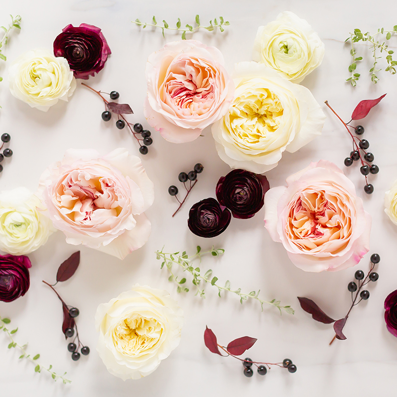 DIGITAL BLOOMS MARCH 2019 | FREE DESKTOP WALLPAPER | Free Winter 2019 Floral Desktop Wallpapers featuring Blush Garden Roses and Patience Roses, White and Burgundy Ranunculus and Foraged Black Berries and Greenery on a marble background // JustineCelina.com x Rebecca Dawn Design