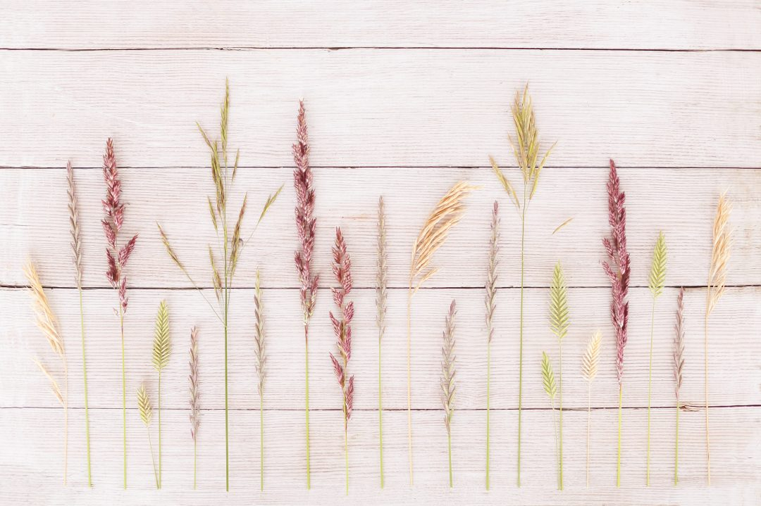 DIGITAL BLOOMS JULY 2020 | FREE DESKTOP WALLPAPER | A wild prairie grass FREE Desktop Wallpaper for Summer 2020 | Free Summer Country Wallpapers | JustineCelina Summer 2020 Digital Blooms | Free Wild Grass Desktop Wallpaper featuring Reed Canary Grass, Smooth Brome, Perennial Ryegrass, Crested Wheatgrass and Cheatgrass on whitewashed country barn board from Wheatland County | Wild Grass Free Wallpaper for Phone Tablet and Computer | Natural Summer Wild Grass Tech Wallpaper // JustineCelina.com