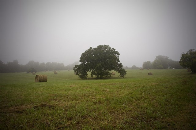 Tree in a foggy field