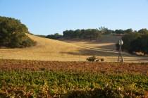 Proulx Wines Vineyard Windmill