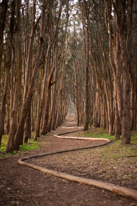 Andy Goldsworthy Wood Line