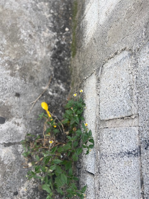 Série: Jardim das Delícias – 25