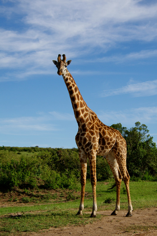 Baby Animals Hd Wallpapers Giraffes Are Cool Justinsomnia