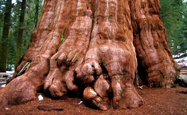 I Touched The Largest Organism ON EARTH Justinsomnia
