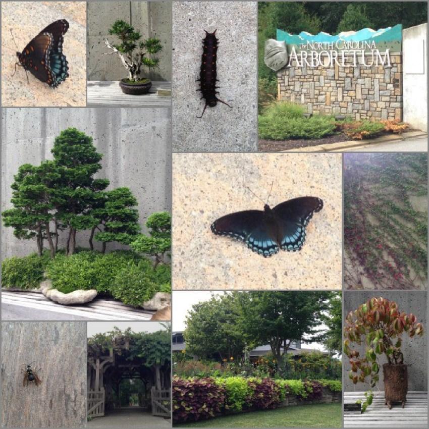 WNC Arboretum