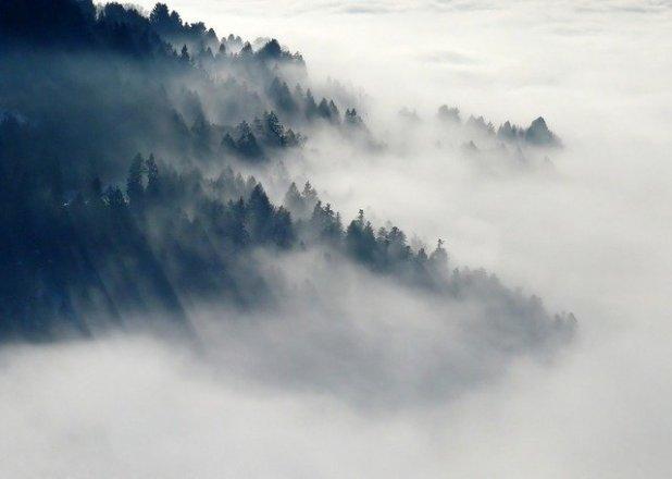 niebla suspender oposición