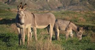 funcionarios burros plusvalía municipal