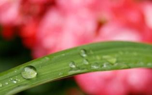 Blessing Rain