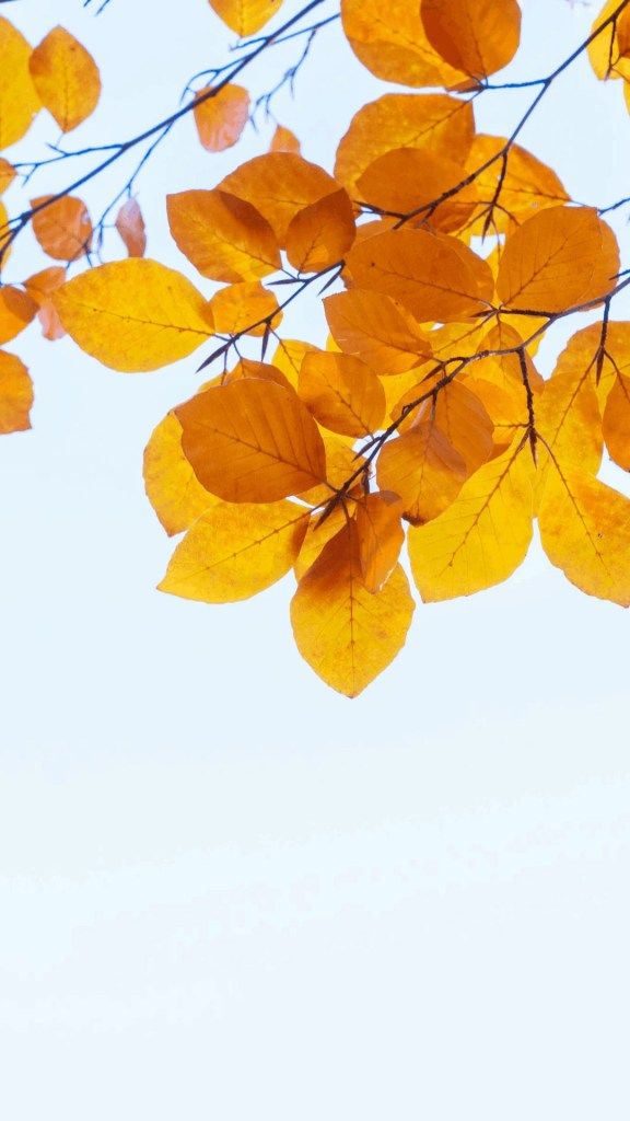40+ Beautiful Fall Wallpapers - Free Download | Just Jes Lyn