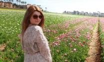 Flower fields15 (1 of 1)