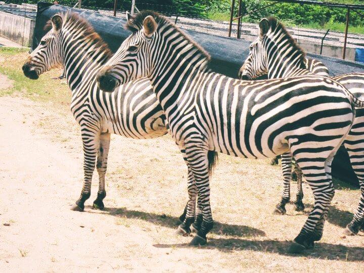 Sustainable Alternatives to Animal Tourism