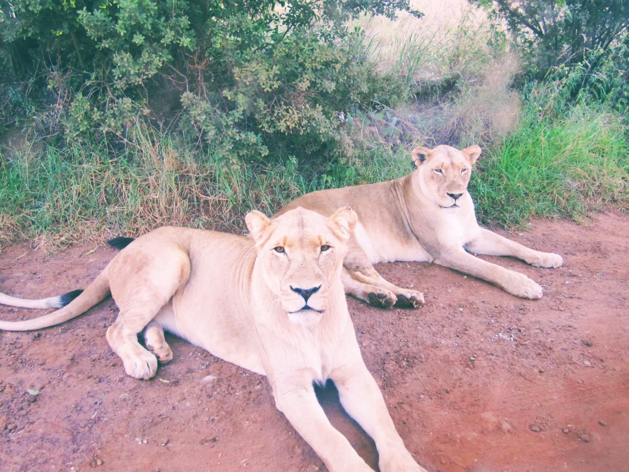 sustainable-animal-tourism-alternatives