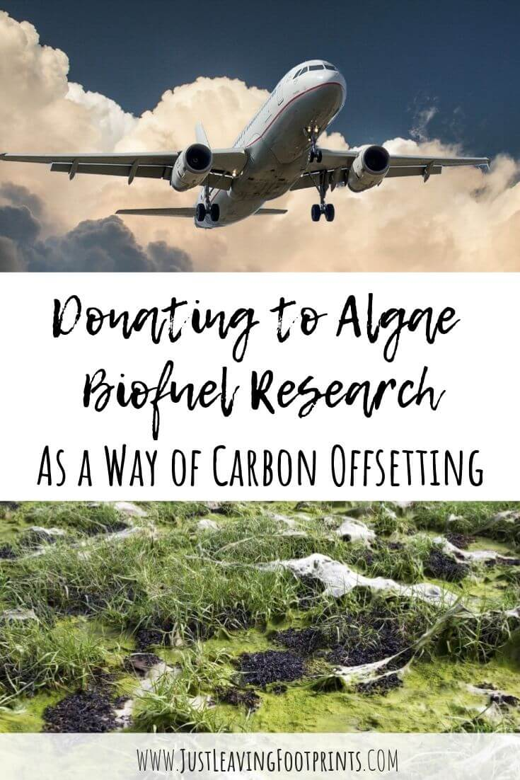 Donating to Algae Biofuel Research as a Way of Carbon Offsetting