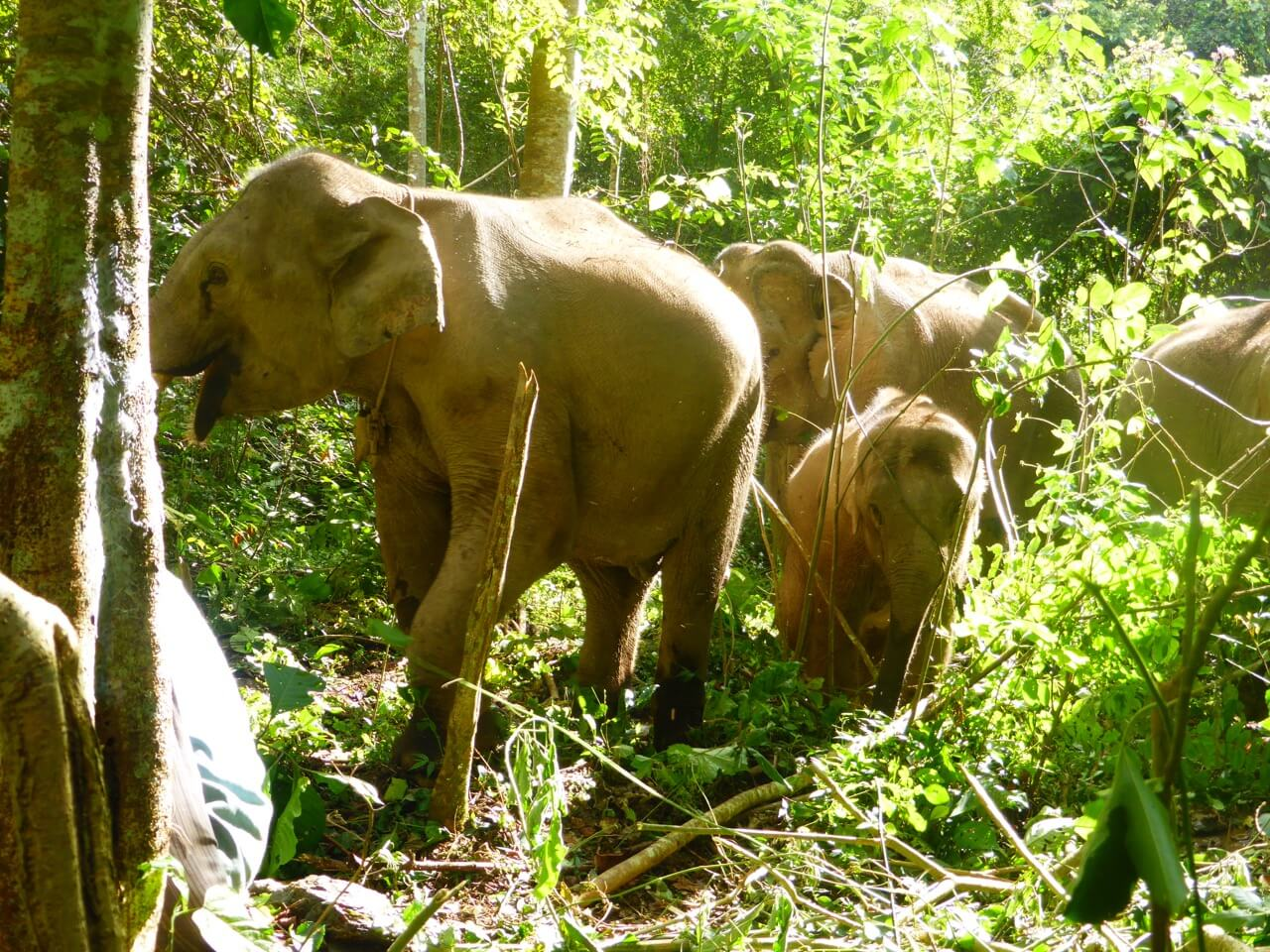 Ethical Animal Tourism: Emma's Family Experience in South East Asia