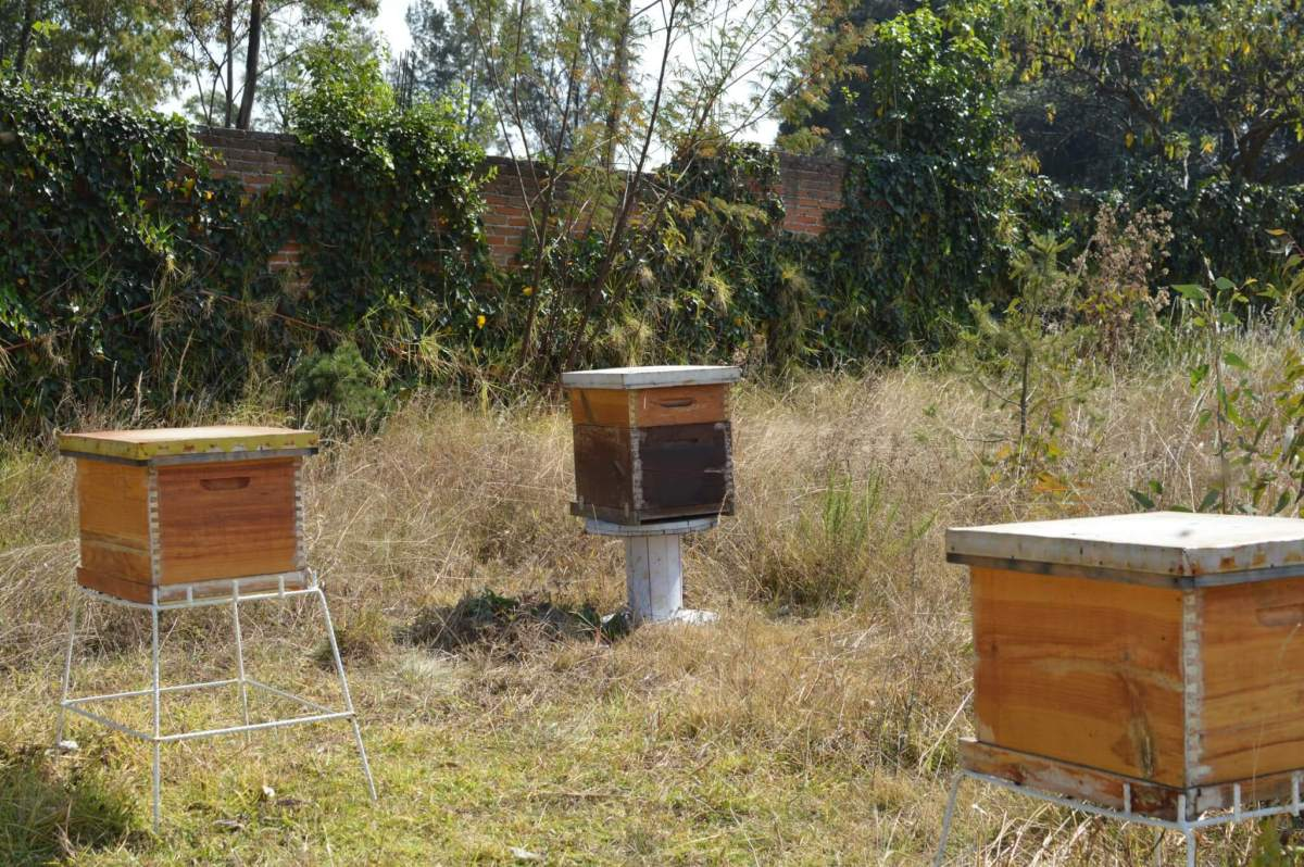 Bee Hives in Mexico City   Apicultura Mx