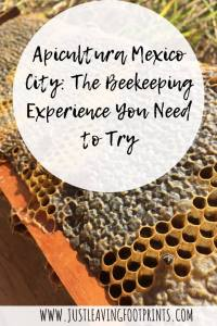 Apicultura Mexico City   The Eco Beekeeping Experience You Need to Try