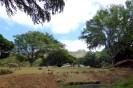 Giraffes view of Diamond Head