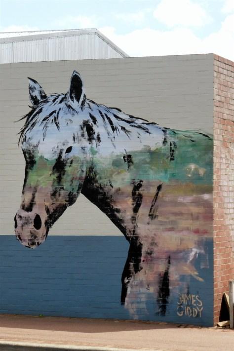 Horse in Dwellingup