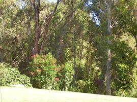 Oleander in Spain