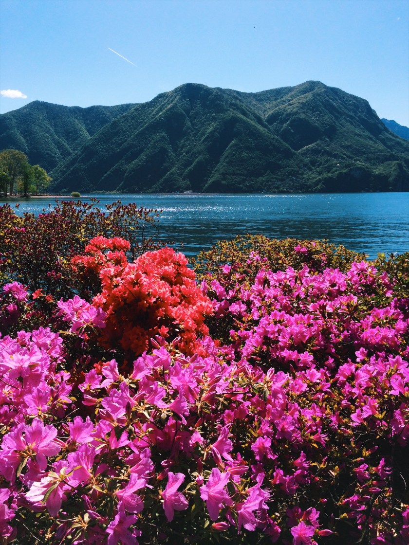 Spring blooms in Lugano, Switzerland