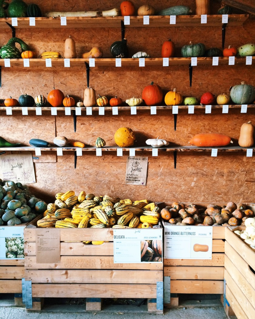 Pumpkin shopping on Juckerfarm Switzerland