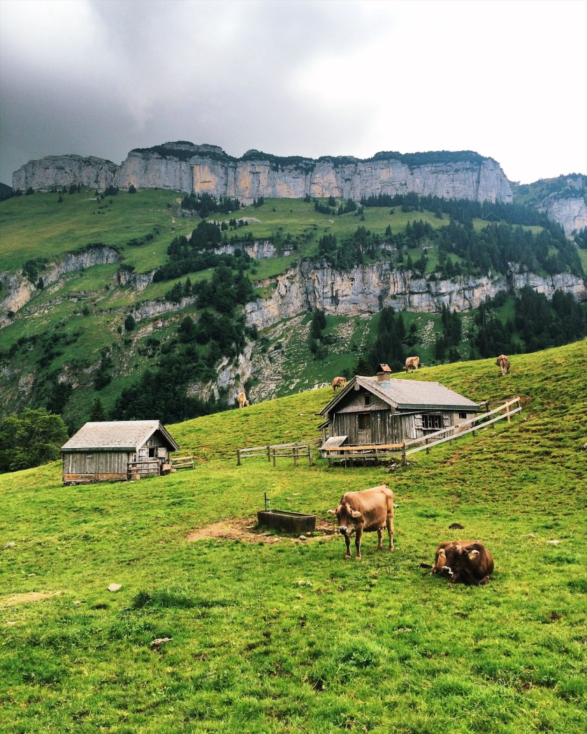 Appenzell landscape and friendly cows