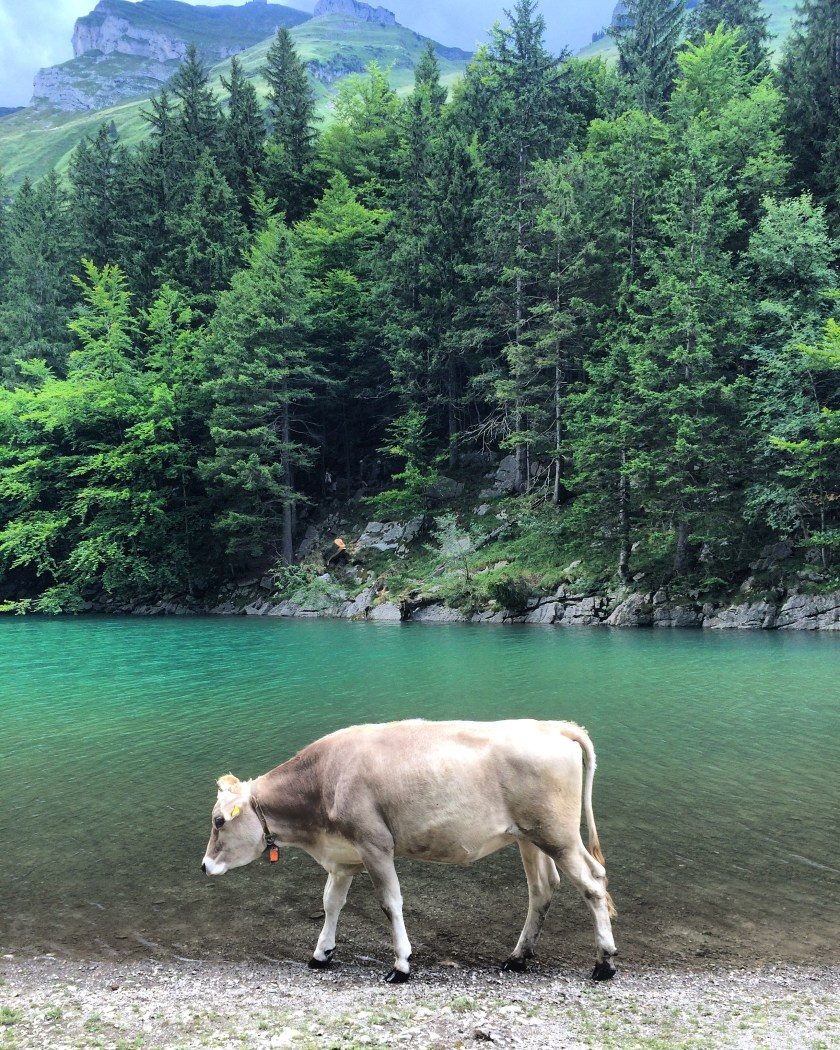 switzerland-travel-appenzell-cow-seealpsee-mountain-view-blogger