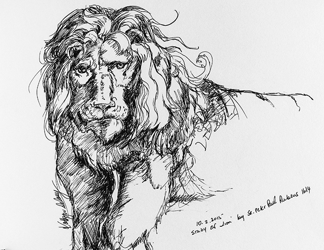 Image of a line drawing study of Lion by Kathryn Delany