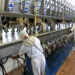 The Truth About Pasteurized Milk That The Food Industry Won't Tell You
