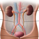 Keep Your Kidneys Young With These 10 Simple Tricks