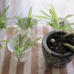 5 Houseplants that Detox the Air in Your Lungs (And Home!)