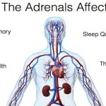 14 Ways to Test if You Really Have Adrenal Fatigue