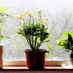 5 Overlooked Factors that Affect Your Happiness at Home